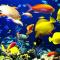 В Петербурге появится огромнейший океанариум