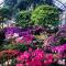 В Ботаническом саду пышно цветут азалии